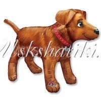 Шар фигура Собака золотистая